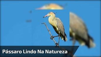 Lindo Pássaro Da Natureza, Mais Um Para Sua Coleção De Vídeos!