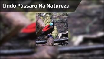 Lindo Pássaro Na Natureza, O Canto E O Colorido Dele São Maravilhosos!