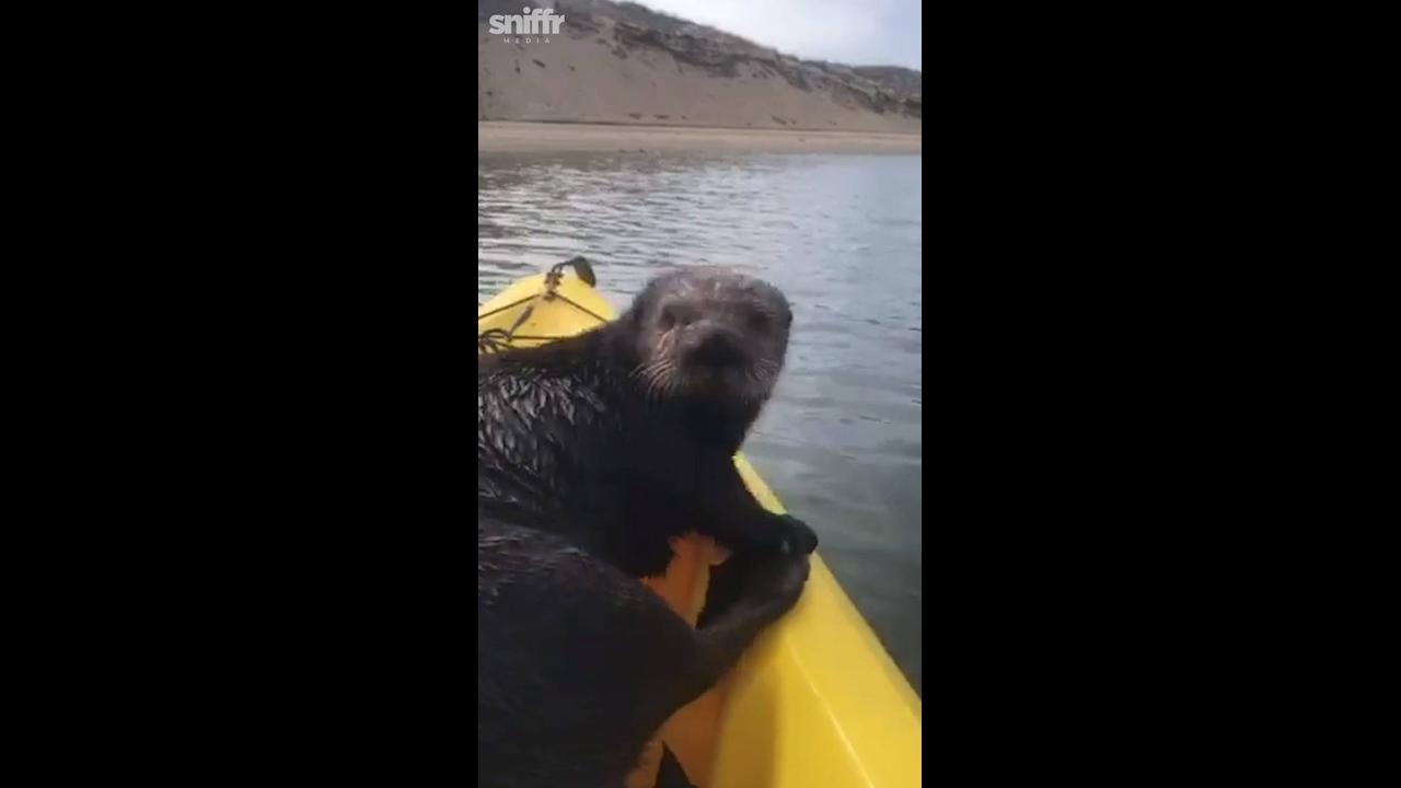 Lontra invade canoa