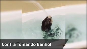 Lontra Tomando Banho De Banheira, É Muita Fofura Pra Uma Criaturinha Só!