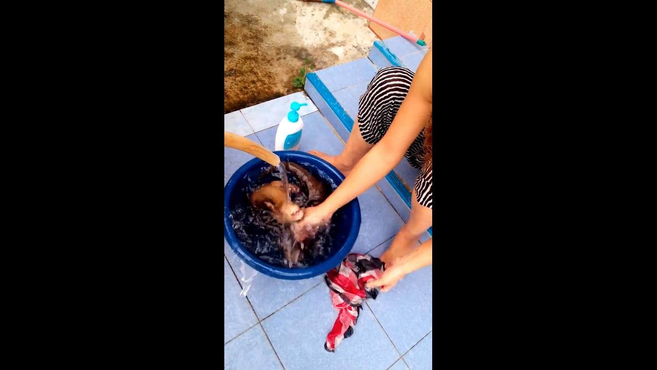 Lontras tomando banho, olha só que coisinhas fofinhas gente
