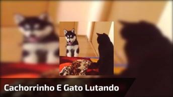 Luta Entre Gato E Filhote De Husky Siberiano, Quem Será Que Ganha Essa Luta?