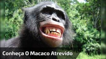 Macaco Beijando Mulher, Esse Bichinho É Abusado Hein Hahaha!