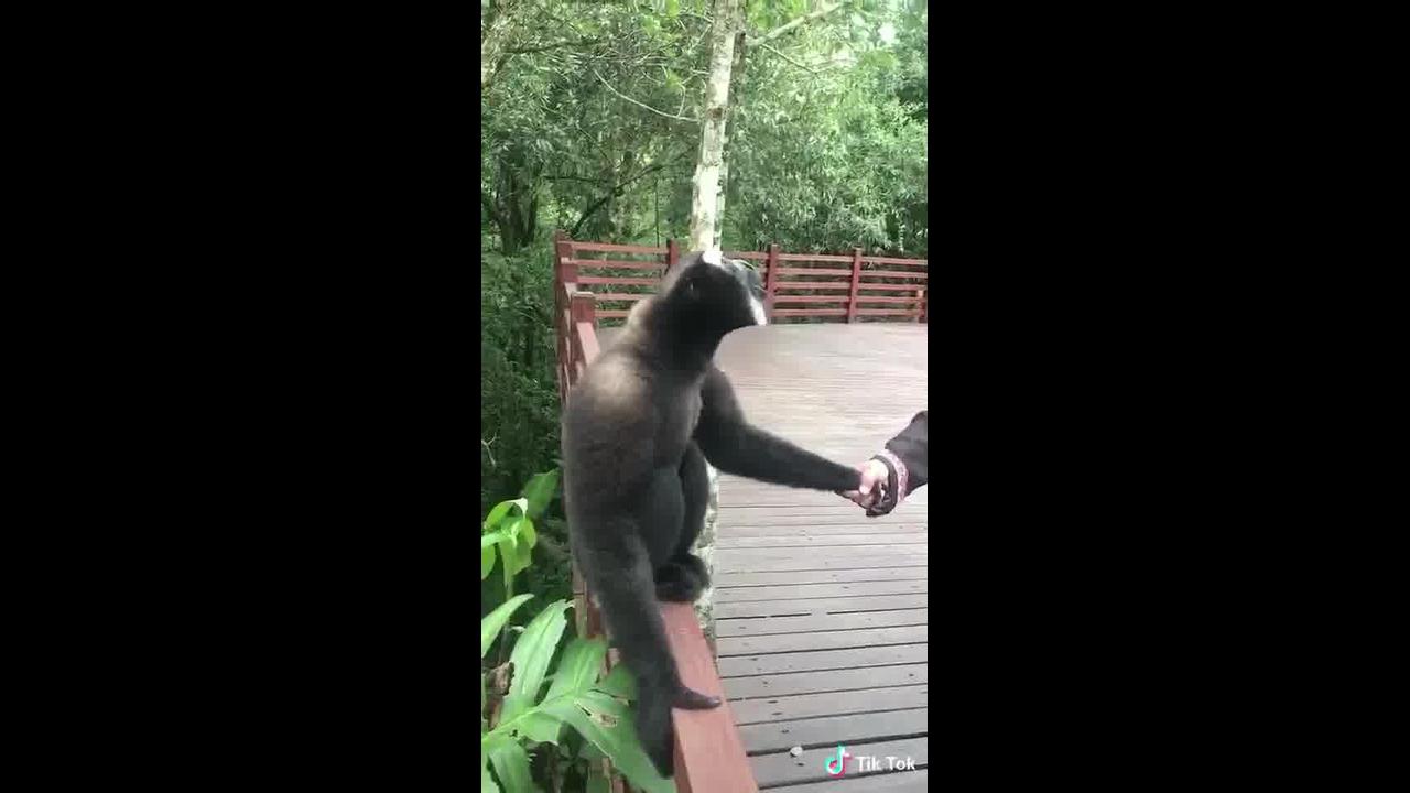 Macaco dando gritos, ele parece estar muito feliz