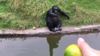 Macaco Pede Laranja Do Outro Lado Do Rio, E Parece Que Ele Gosta Mesmo!