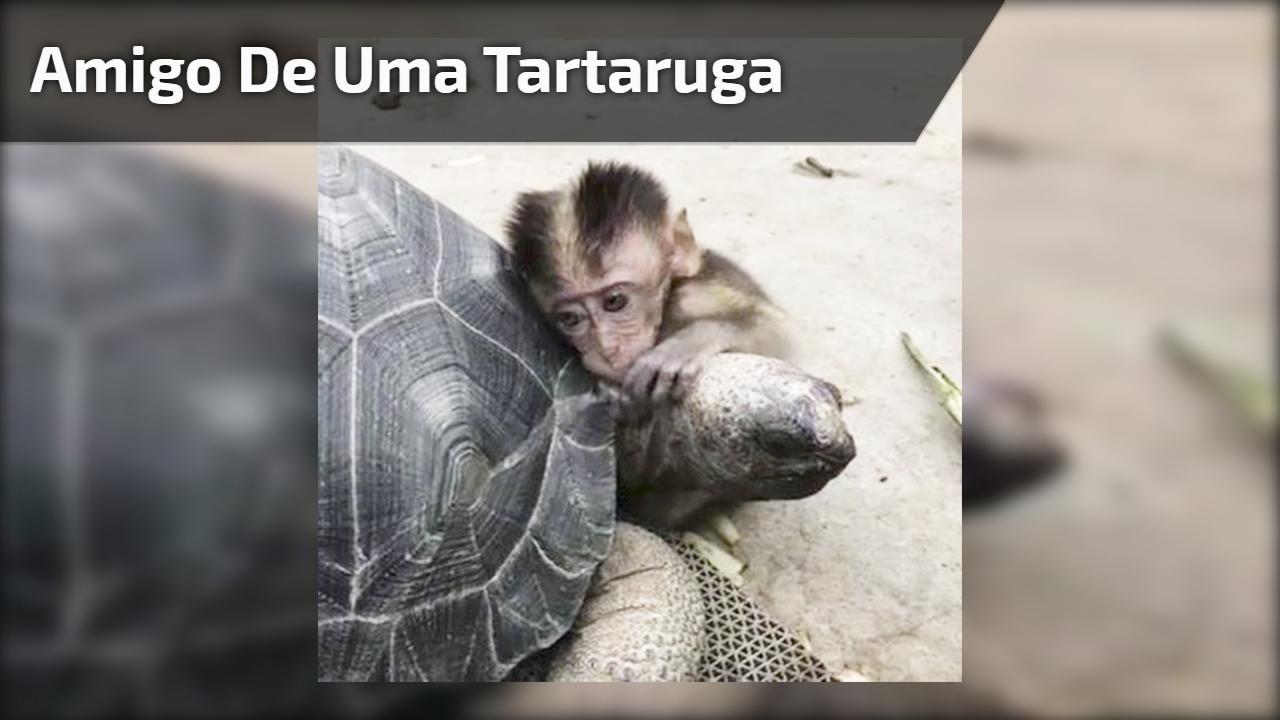 Amigo de uma tartaruga