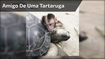 Macaquinho Amigo De Uma Tartaruga, Veja Que Imagem Mais Fofa!