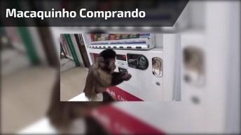 Macaquinho Comprando Refrigerante Em Máquina, Ele É Uma Fofura!
