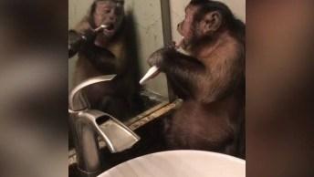 Macaquinho Escovando Os Dentes, Nada De Dente Podre Nessa Boca!