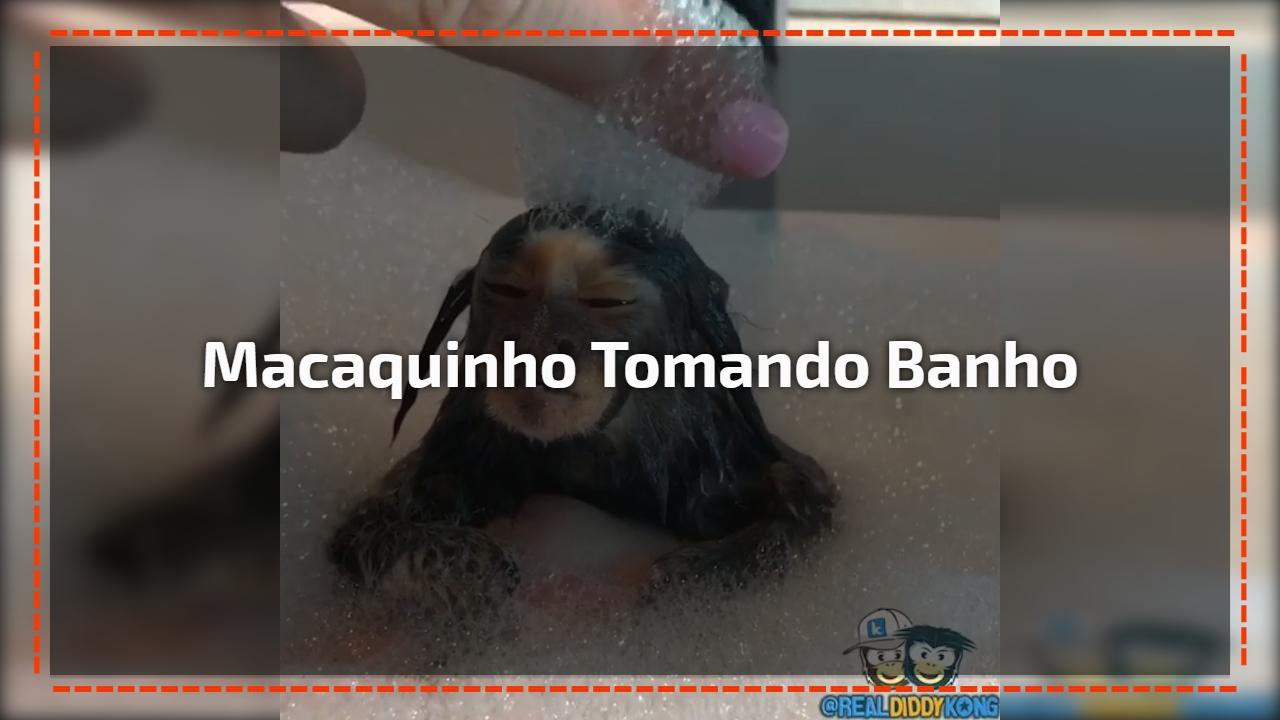 Macaquinho tomando banho