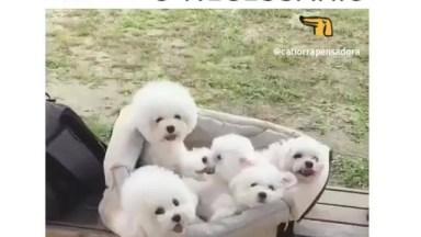 Mala De Cachorrinhos, É Só O Necessário Que Esta La Dentro Hahaha!