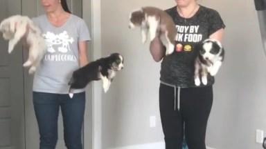 Malhando Com Cachorrinhos, Eles Ajudam A Gente Até Nessas Horas!