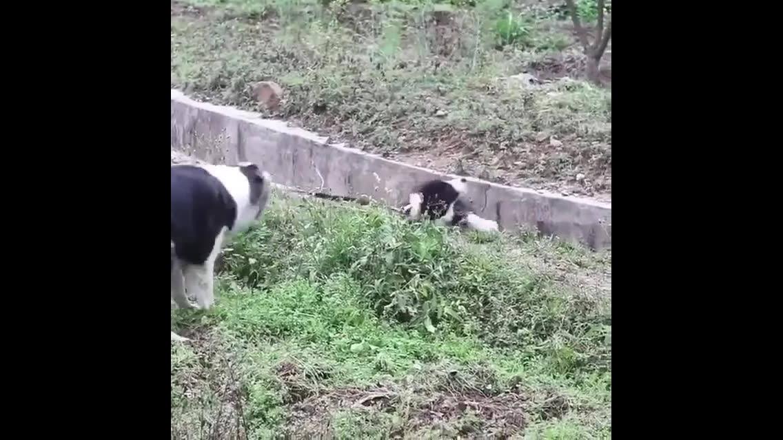 Mamãe cachorra ajudando o filhote a sair de um lugar que caiu