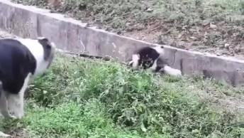 Mamãe Cachorra Ajudando O Filhote A Sair De Um Lugar Que Caiu!