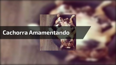 Mamãe Cachorra Deitada De Barriga Para Cima Para Seus Filhotes Mamar A Vontade!