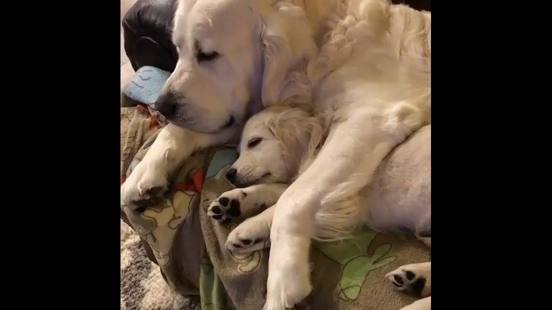 Mamãe cachorra dormindo abraçada com seu filhote