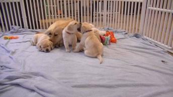 Mamãe Cachorra E Seus Três Filhotinhos, Que Coisa Mais Linda!