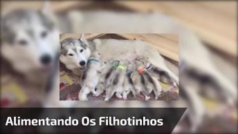 Mamãe Cachorro Tentando Alimentar Seus 10 Filhotinhos, Tem Uns Ficando Com Fome!