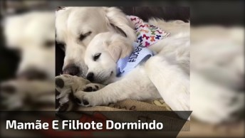 Mamãe E Filhotinho Dormindo Juntinhos, Esses Cães São Fofos Demais!
