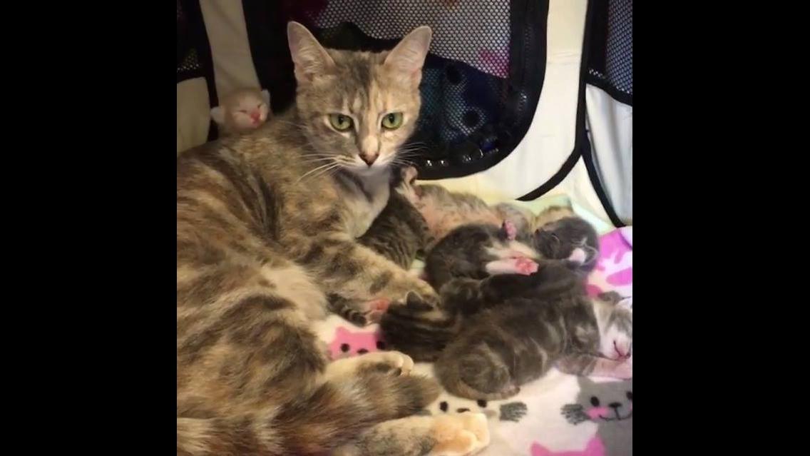 Mamãe fato e seus filhotinhos lindinhos