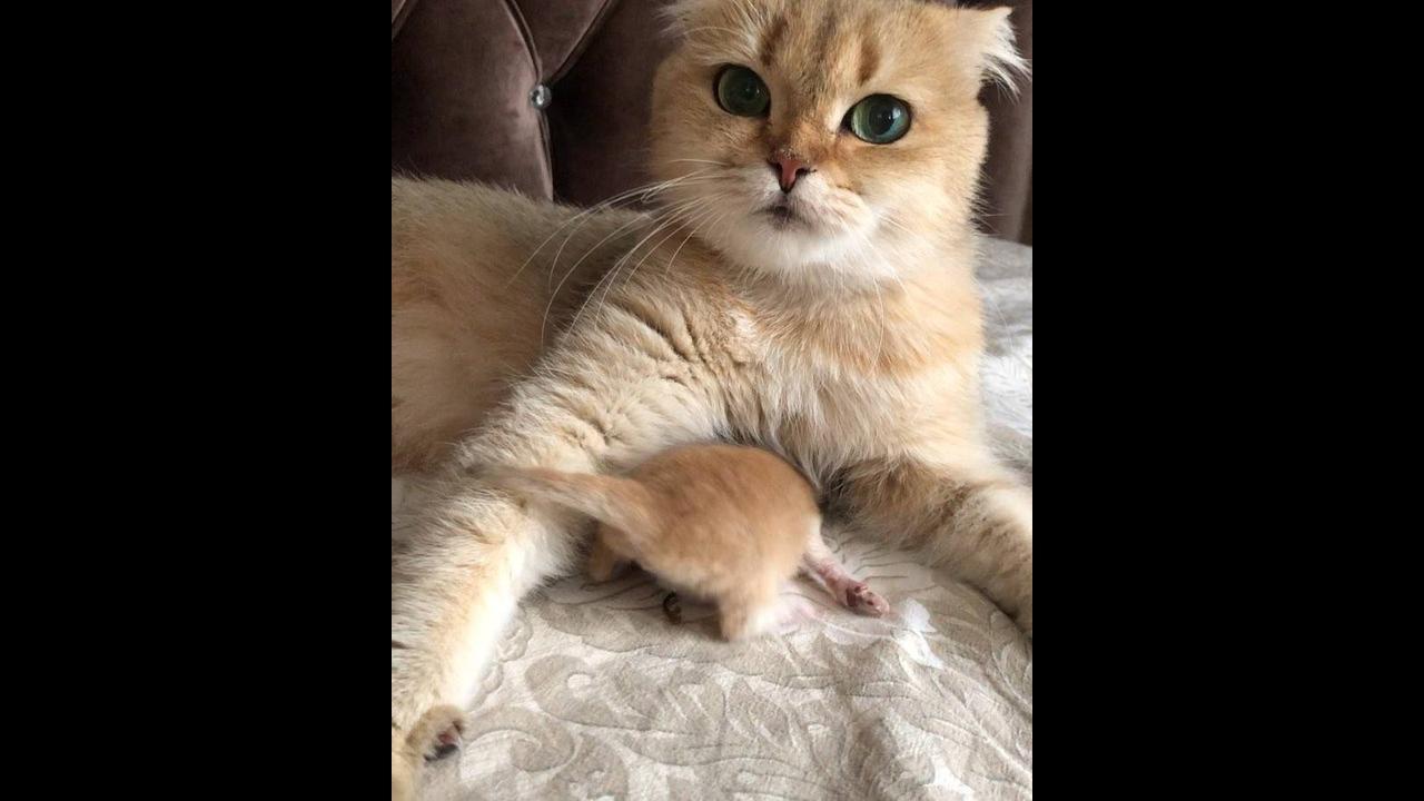 Mamãe gata sem entender o que o filhote esta querendo