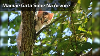 Mamãe Gata Sobe Na Árvore Para Ensinar Seu Bebê A Descer, Que Fofura!