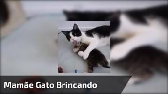 Mamãe Gato Brincando Com Seu Filhinho, É Muito Amor, Confira!