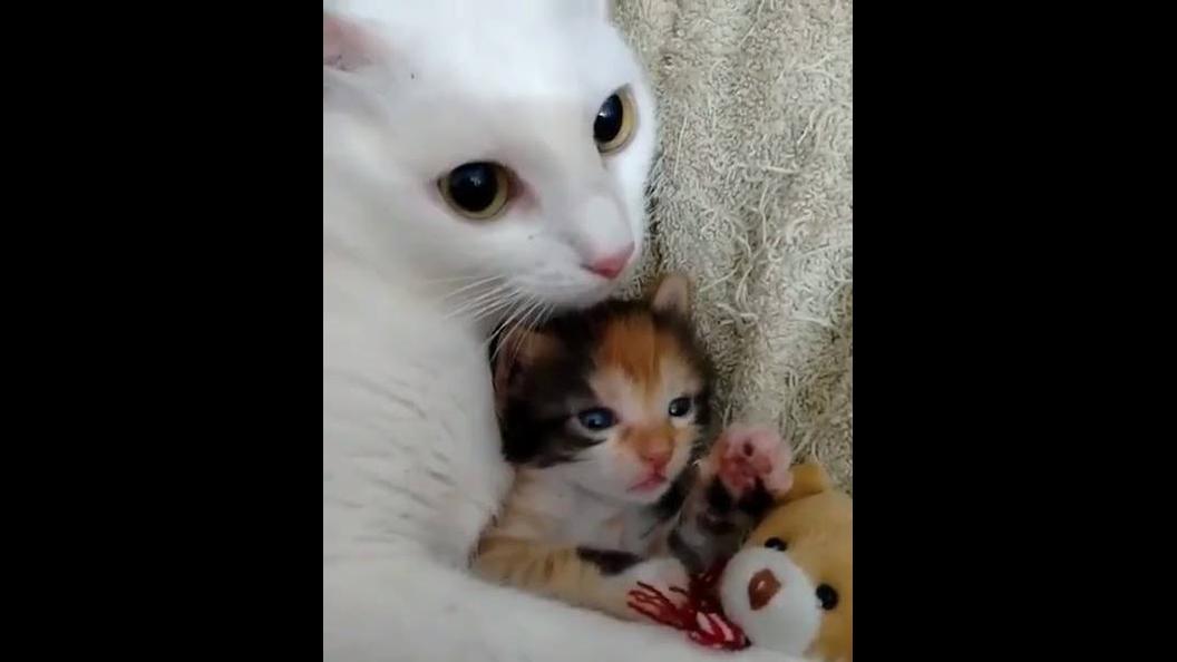 Mamãe gato cuidando de seu pequeno filhotinho