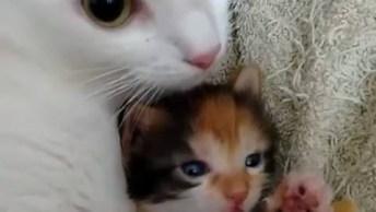 Mamãe Gato Cuidando De Seu Pequeno Filhotinho, Olha Só Que Coisinha Mais Linda!