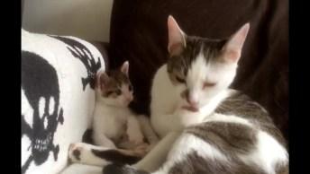 Mamãe Gato E Seu Filhotinho, Olha Só Que Amor Estes Gatinhos!