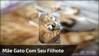 Mamãe Gato Tirando Um Cochilo Com Seu Filhote, Um Vídeo Cheio De Amor E Carinho!