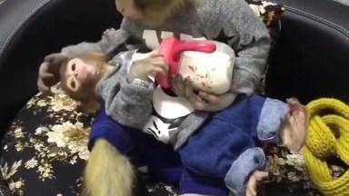 Mamãe Macaca Dando Mamadeira Para Seu Filhote, Que Cena Linda!