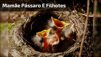 Mamãe Pássaro Escondendo Seus Filhotes Embaixo Da Asa, Que Fofa!
