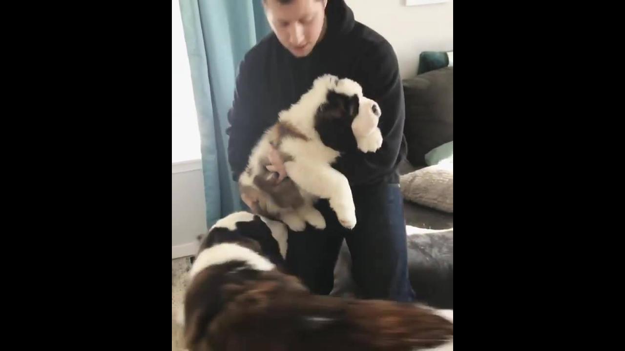 Mamãe recebendo seu filhote, que raça de cachorro mais linda!