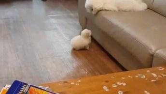 Mamãe Tentando Ensinar O Filho A Subir No Sofá, Que Fofura!