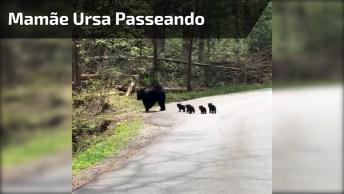 Mamãe Ursa Passeando Com Seus Filhotes, É Melhor Nem Chegar Perto!
