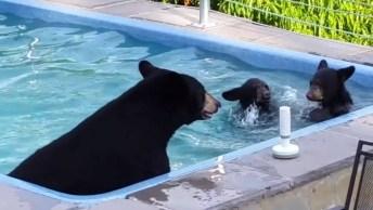 Mamãe Urso E Seus Filhotes Curtindo A Piscina Em Um Dia Quente De Verão!