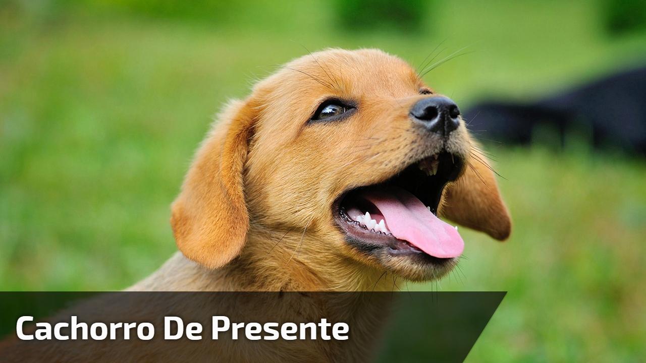 Cachorro de presente