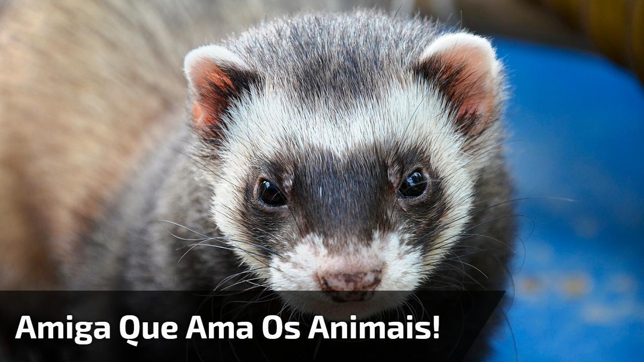 Amiga que ama os animais!