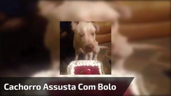 Marque Seu Amigo Do Facebook Que Não Pode Ver Comida, Igual Este Dog, Kkk!