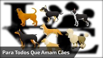 Marque Seu Amigo Que Ama Cachorrinhos E Gatinhos Abandonados De Rua!