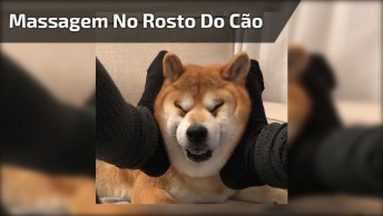 Massagem No Rosto De Um Cachorro, Quem Gostaria De Uma Massagem Dessa?