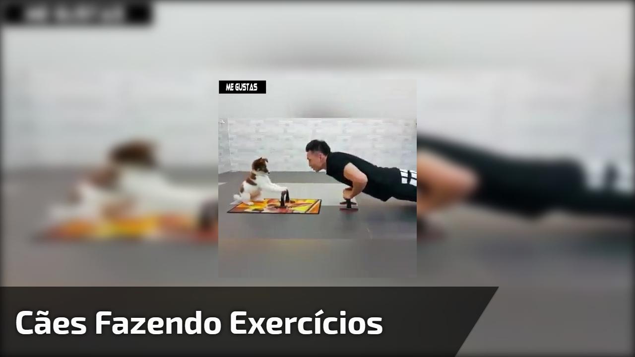 Cães fazendo exercícios