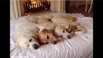 Melhor Que Um Cão, Só Mais De Um, Veja Como São Lindos!