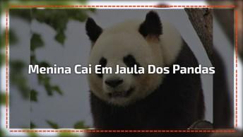 Menina Cai Em Jaula Com Ursos Pandas, Todo Cuidado É Pouco!