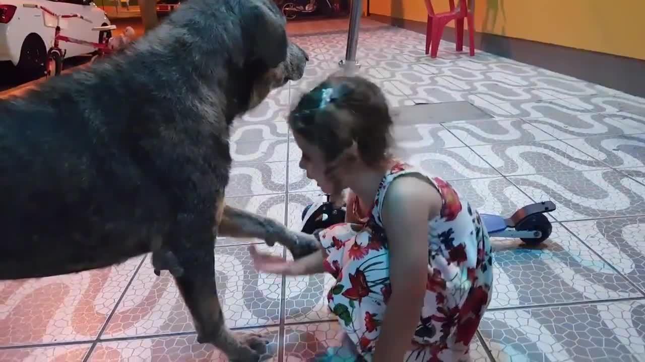 Menina dá amor e carinho para cachorro de rua