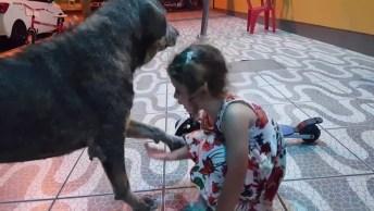 Menina Dá Amor E Carinho Para Cachorro De Rua, Que Coisa Mais Linda!