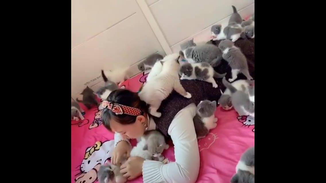 Menina deitada com muitos filhotes de gatos, olha quanta fofura!