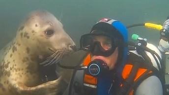 Mergulhador Que As Focas Adoram Abraçar, Que Cena Mais Fofa!