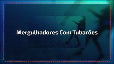 Mergulhadores Dão De Cara Com Tubarões Agressivos, Imagens Tensas!
